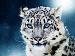2n EP - La classe dels lleopards de les neus
