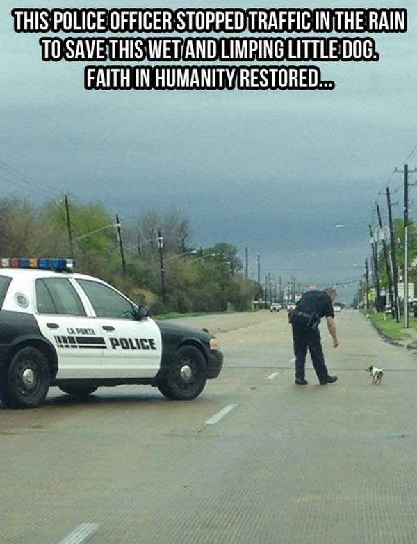 People doing amazing things for animals (28 pics), a police officer stopped a traffic in the rain to save a wet and limping little puppy