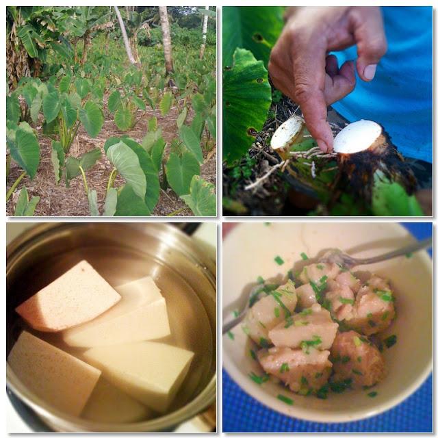 Alessandra Zecchini A Vegetarian In Niue