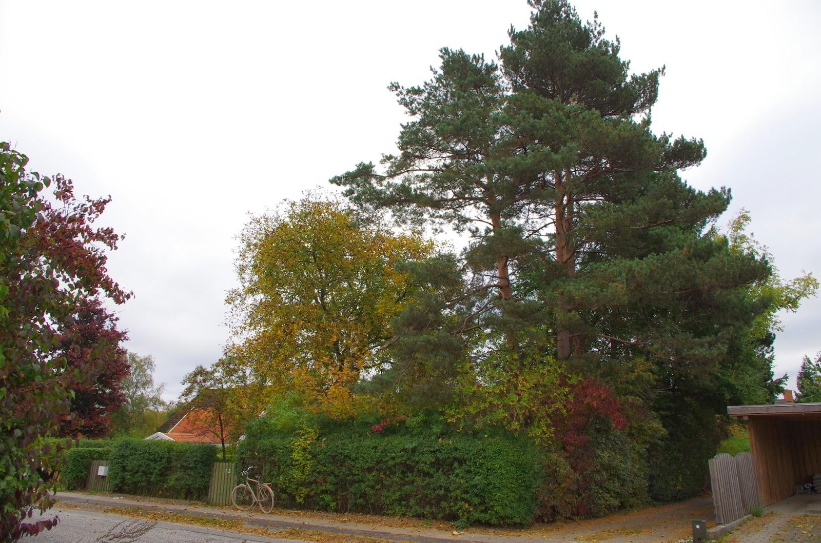 Der stod en skov af træer på grunden.