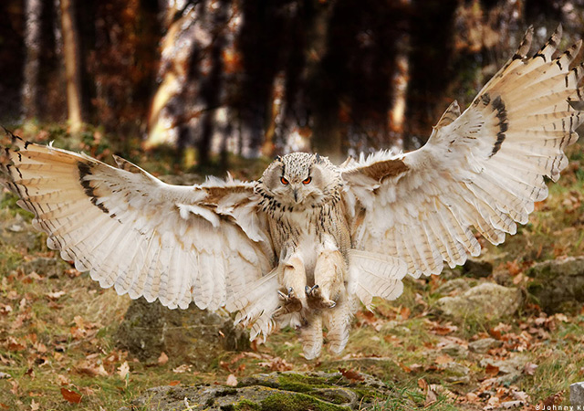 Approach Owl Bird