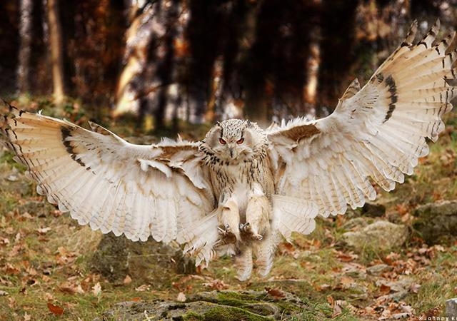 Approach Owl Bird