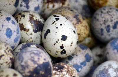 telur puyuh mudah dipasarkan
