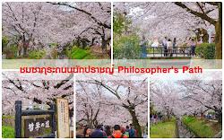 รวมรีวิวที่เที่ยวซากุระที่ญี่ปุ่น