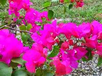 10 Jenis Bunga yang Paling Mudah Perawatannya