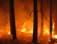 Flammen lodern zwischen den Bäumen