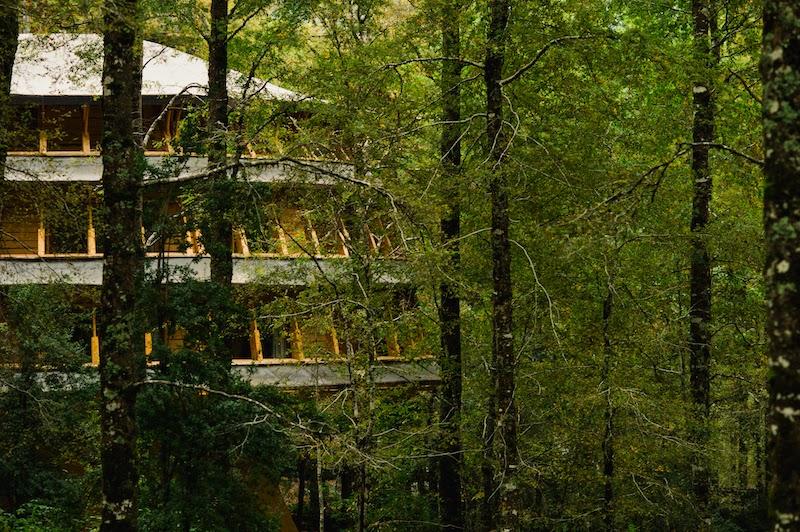 Hotel Reino Fungi, que imita o formato de um cogumelo