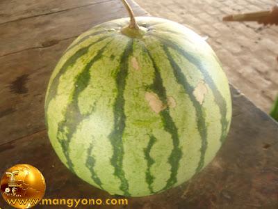 Ini teh buah semangka. Foto jepretan admin.