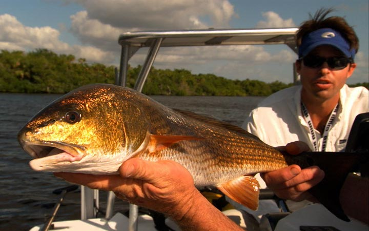 Everglades Winter Fishing Report with Capt. Kevin Mihailoff