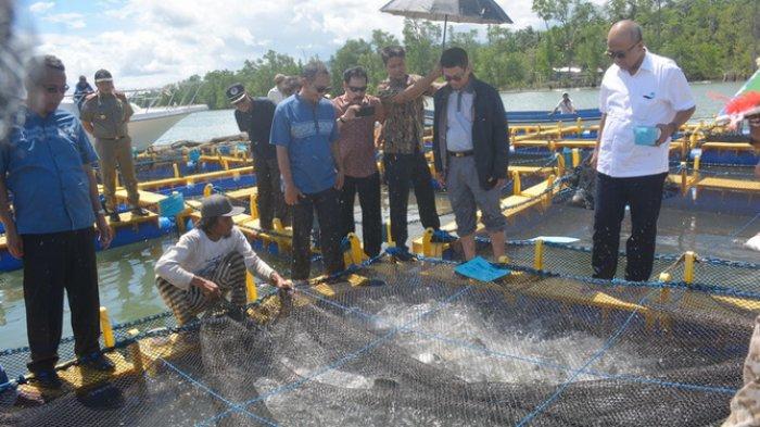 085200203004-Peluang Usaha Pembesaran &  Budidaya Ikan Kerapu di Tambak Karimunjawa