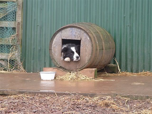 Raising Toot and Roxy: Dog House Idea for Cheap