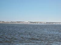 gaviotas paisaje playa uruguay  verano