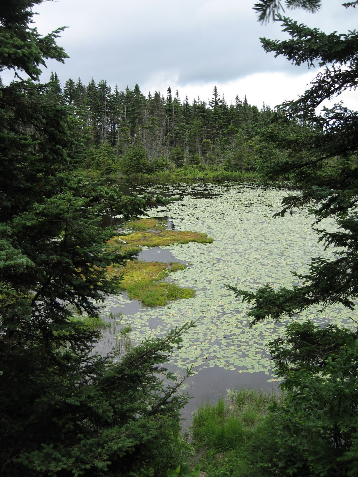 last week week 6 we worked on a project with the us forest service mapping wetlands within the green mountain national forest it was full of bushwacking