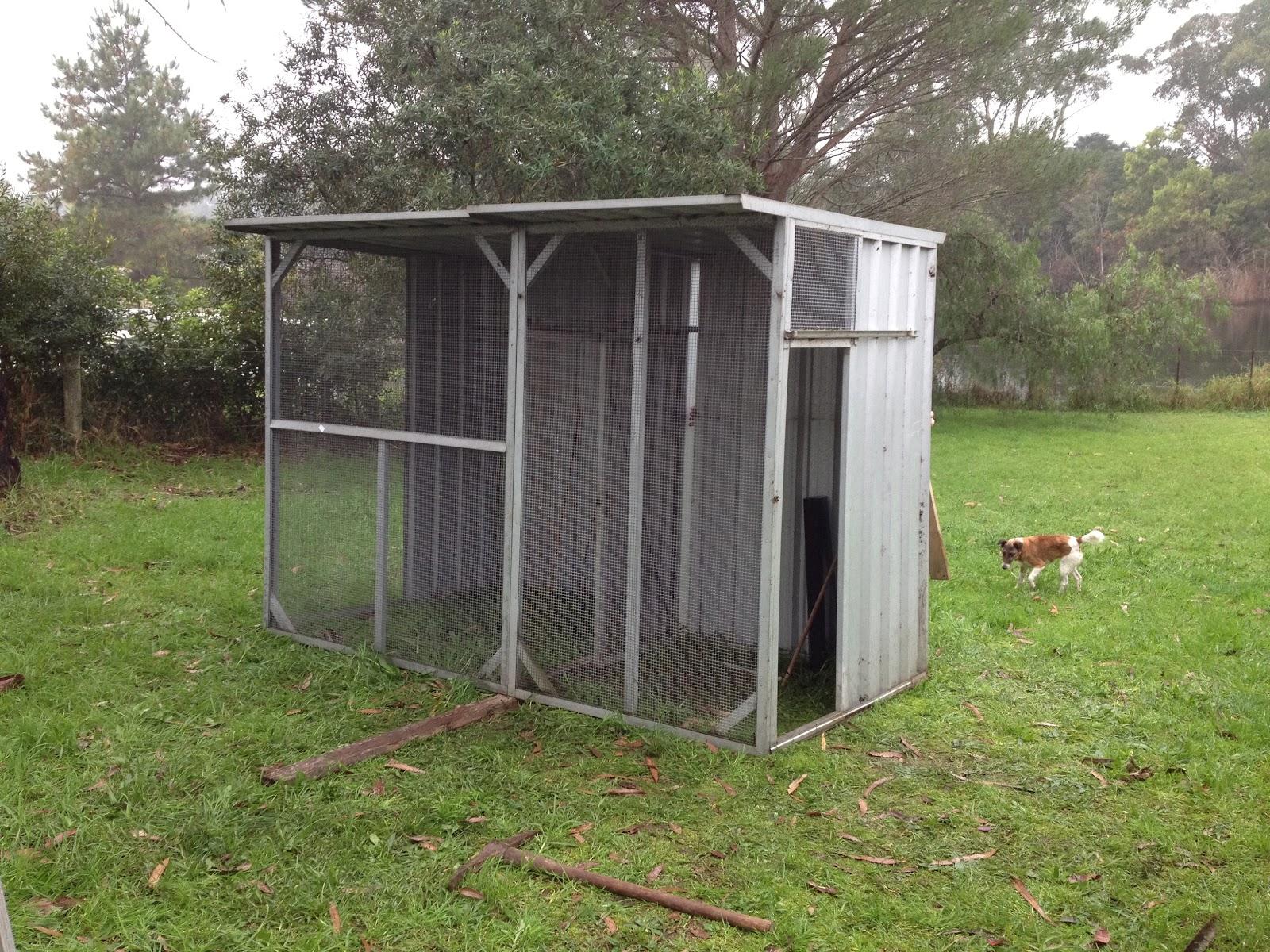 Aussie Bengos: Moving Forward with Breeding
