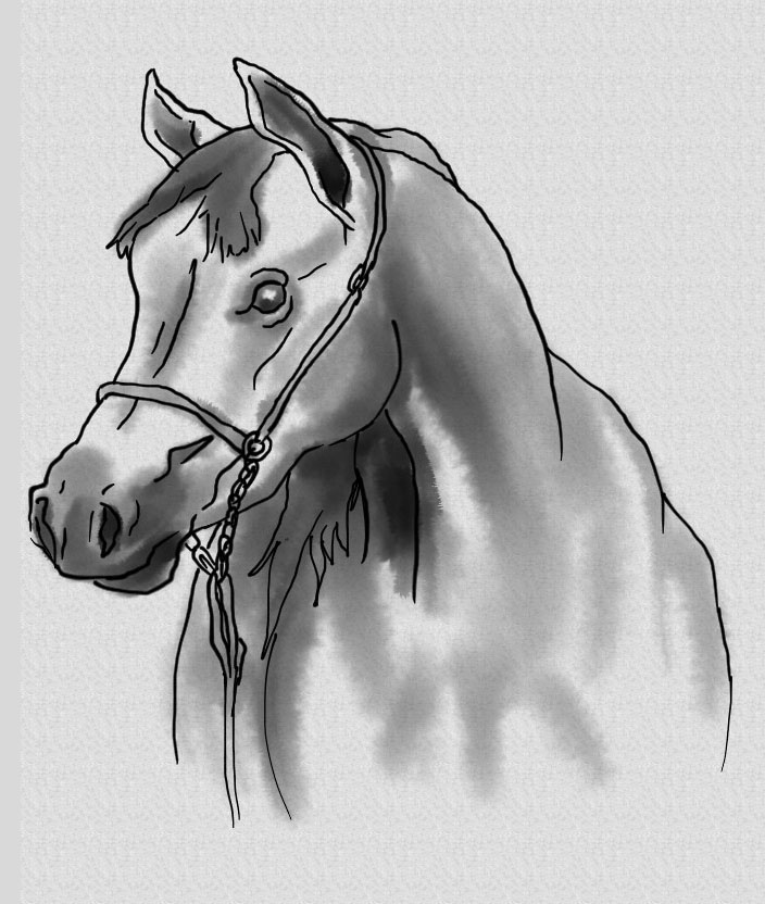 Realistic Horse Head Drawings