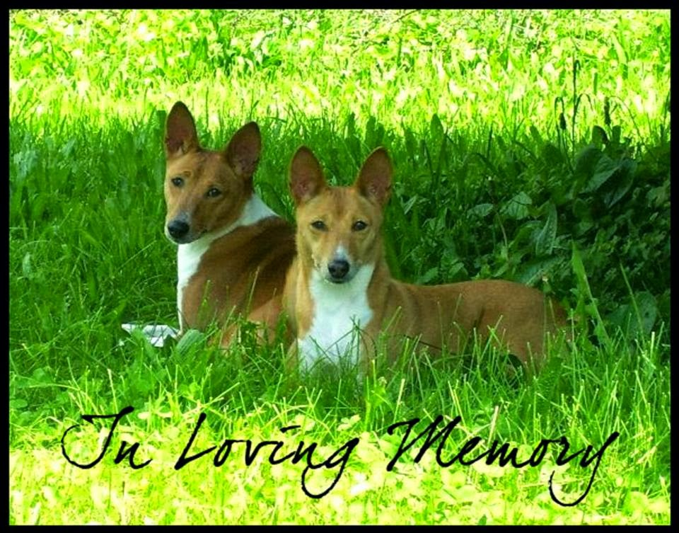 Kingsbrook animal hospitals blog preferred veterinary care in two beloved basenjis kylie and cricket in a house fire in april of 2012 i was devastated my world revolved around my dogs since my husband and i do solutioingenieria Images