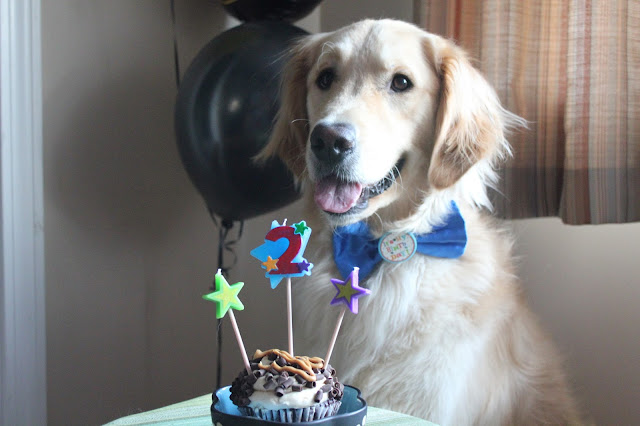 dogs birthday with cupcake