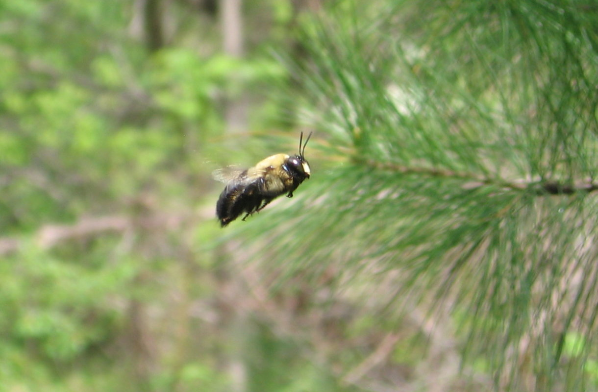Everyday Finesse Getting Rid Of Carpenter Bees