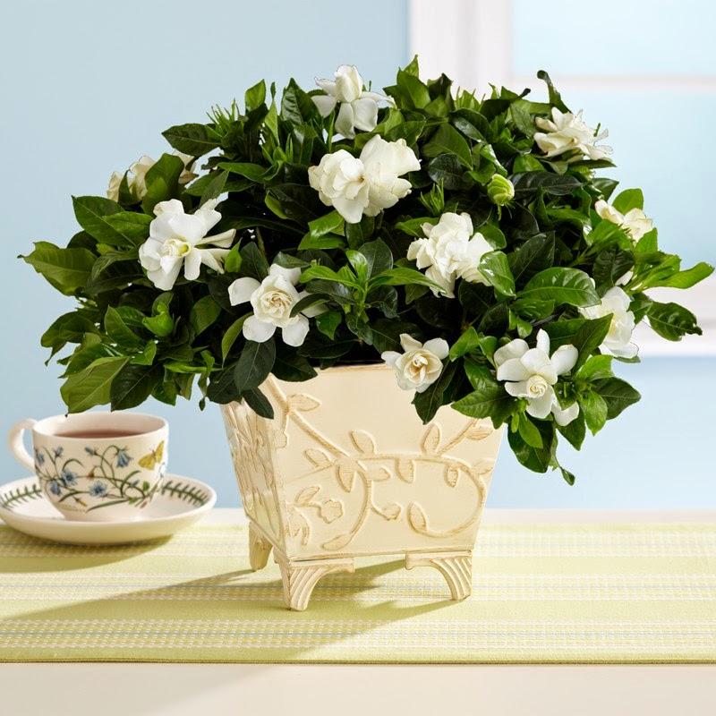 Plantas Exóticas, Regalos para Mamá