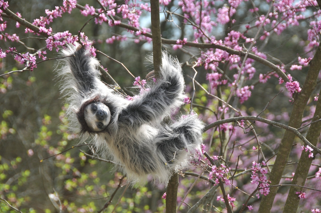 02-Sloth-in-a-Tree-Jesse-Franks-Realistic-Faux-Animal-Sculptures-www-designstack-co