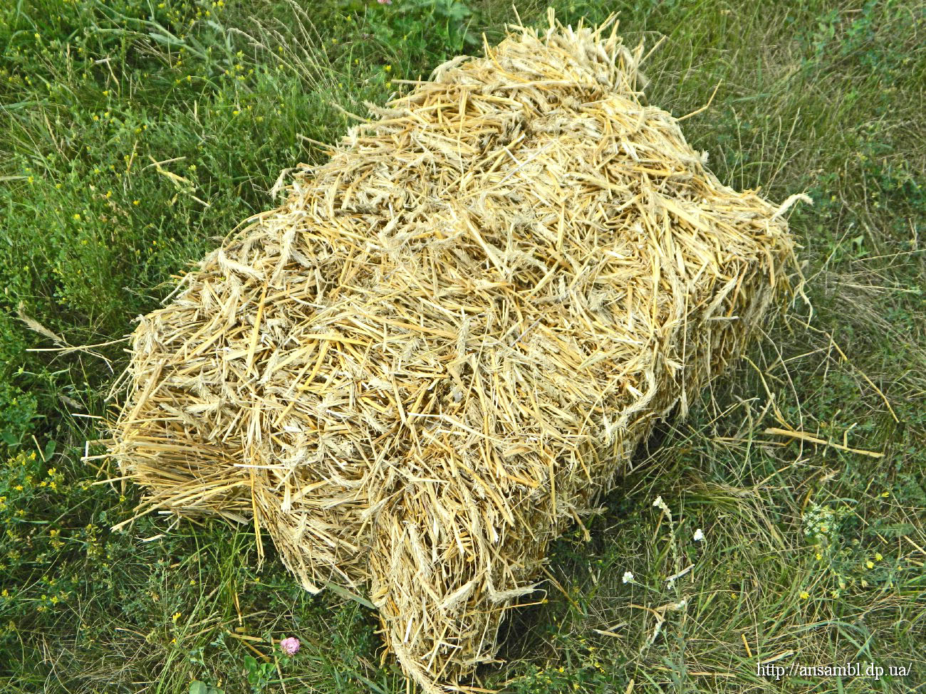 Вид ржаного соломенного тюка на поле