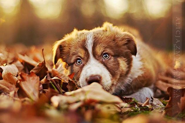 dog portrait photography, pet photos