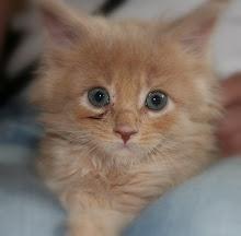 Kit-Blossomkit-she-cat