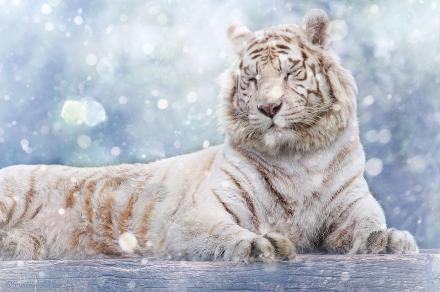 11. Let it snow! by Alida Jorissen
