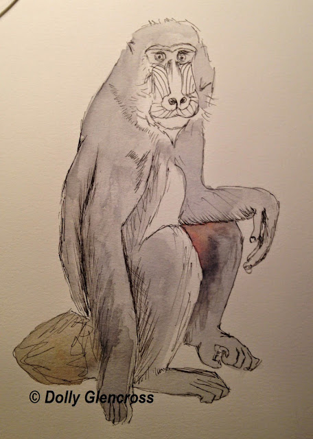 Baboon watercolour By Dolly Glencross