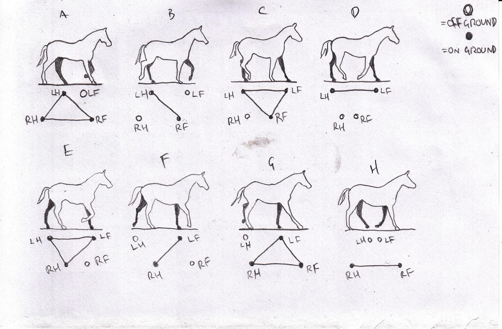 Horse Running Animation Frames - More information