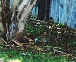 Sleeping Bunny (c)ShaunaChan2012