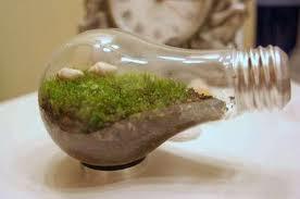 Hacer un terrario con bombilla reciclada