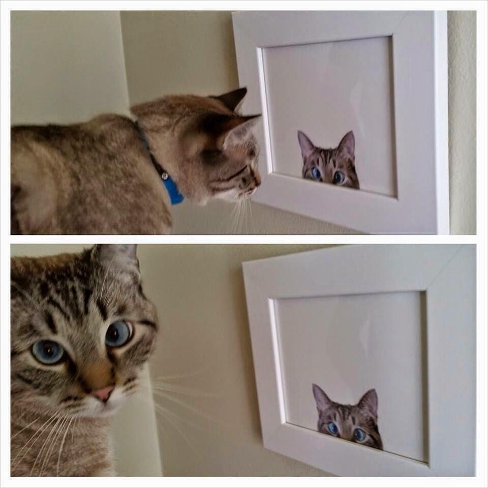 Funny cats - part 109 (40 pics + 10 gifs), cats photos, cat pics