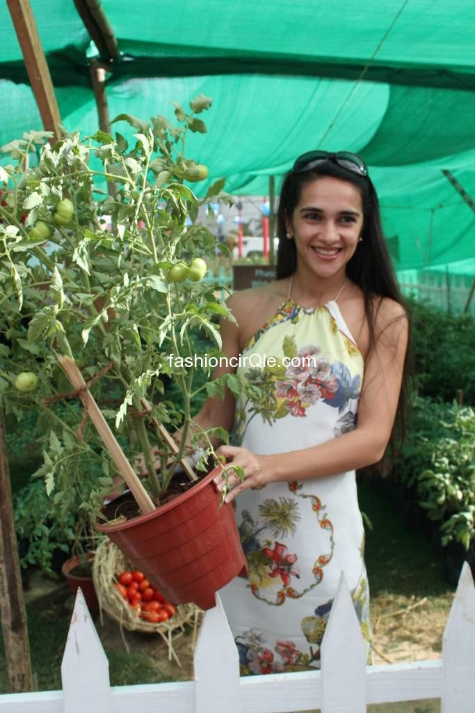 Tara sharma holding a plant pot -  Tara Sharma promoting KISSAN in handkerchief dress