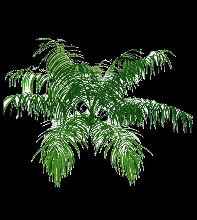 Architecture Tree Plan Palm Tree Plan 02