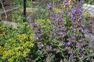 catmint and rue