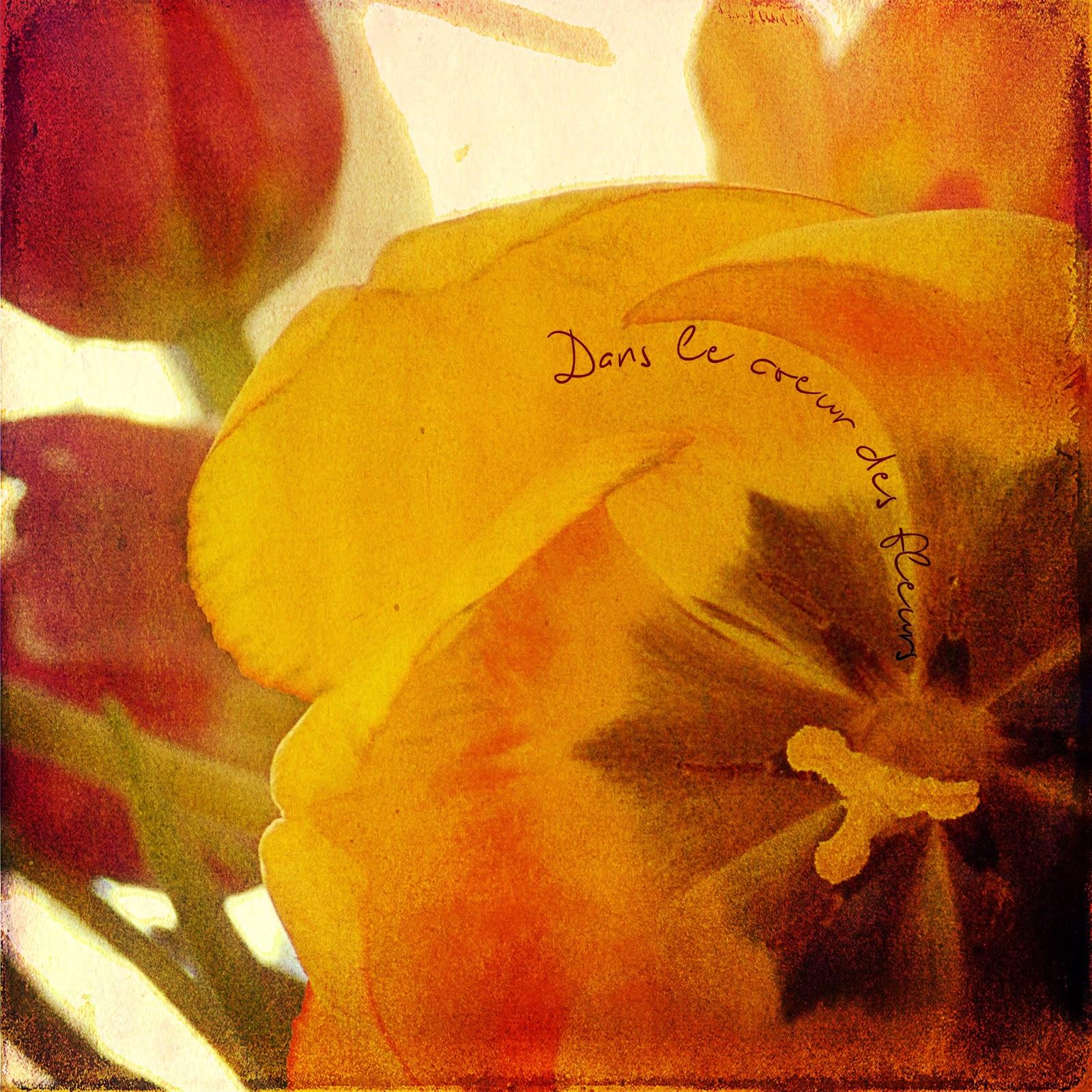 Dans le coeur des fleurs, blending scrap digital