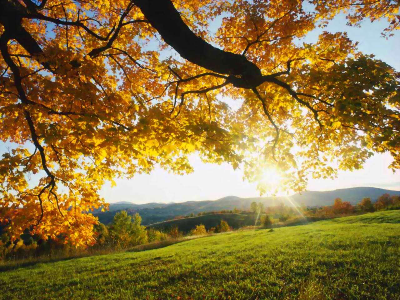 http://3.bp.blogspot.com/-O7BTEZO0nIM/UH6-Z0sQcmI/AAAAAAAAAMU/LID1P3r8Aws/s1600/autumn+morning+wallpaper+desktop+hd+field.jpg