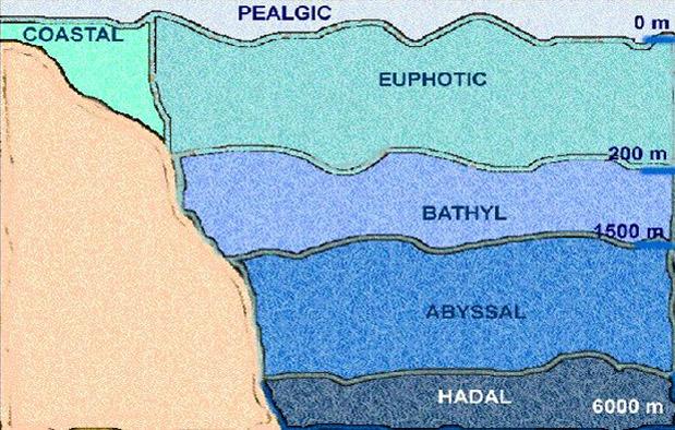 Jenis Ekosistem Laut