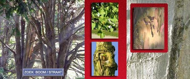 Vlissingse bomen