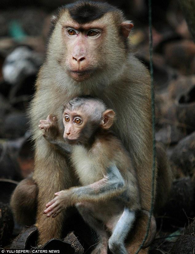 gambar+monyet+comel7.jpg