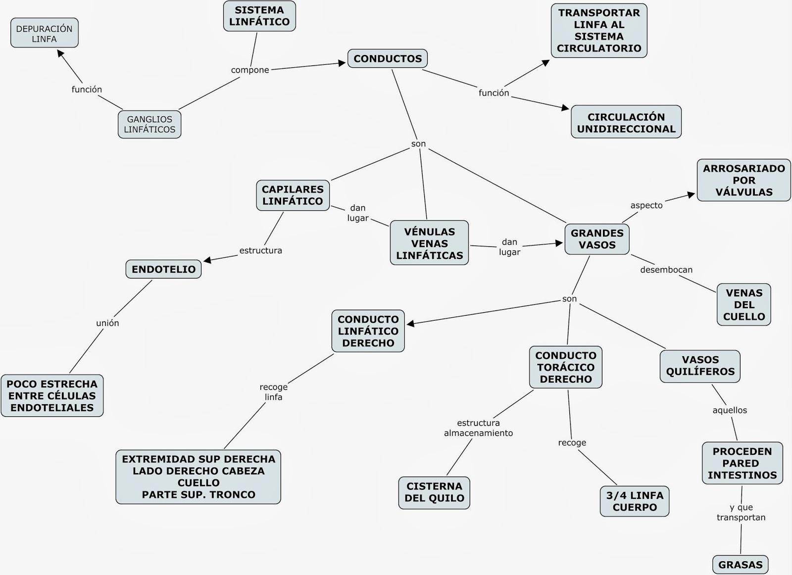 MAPAS CONCEPTUALES (MIND MAPS) y SCIENCE EXPERIMENTS: 02/23/14