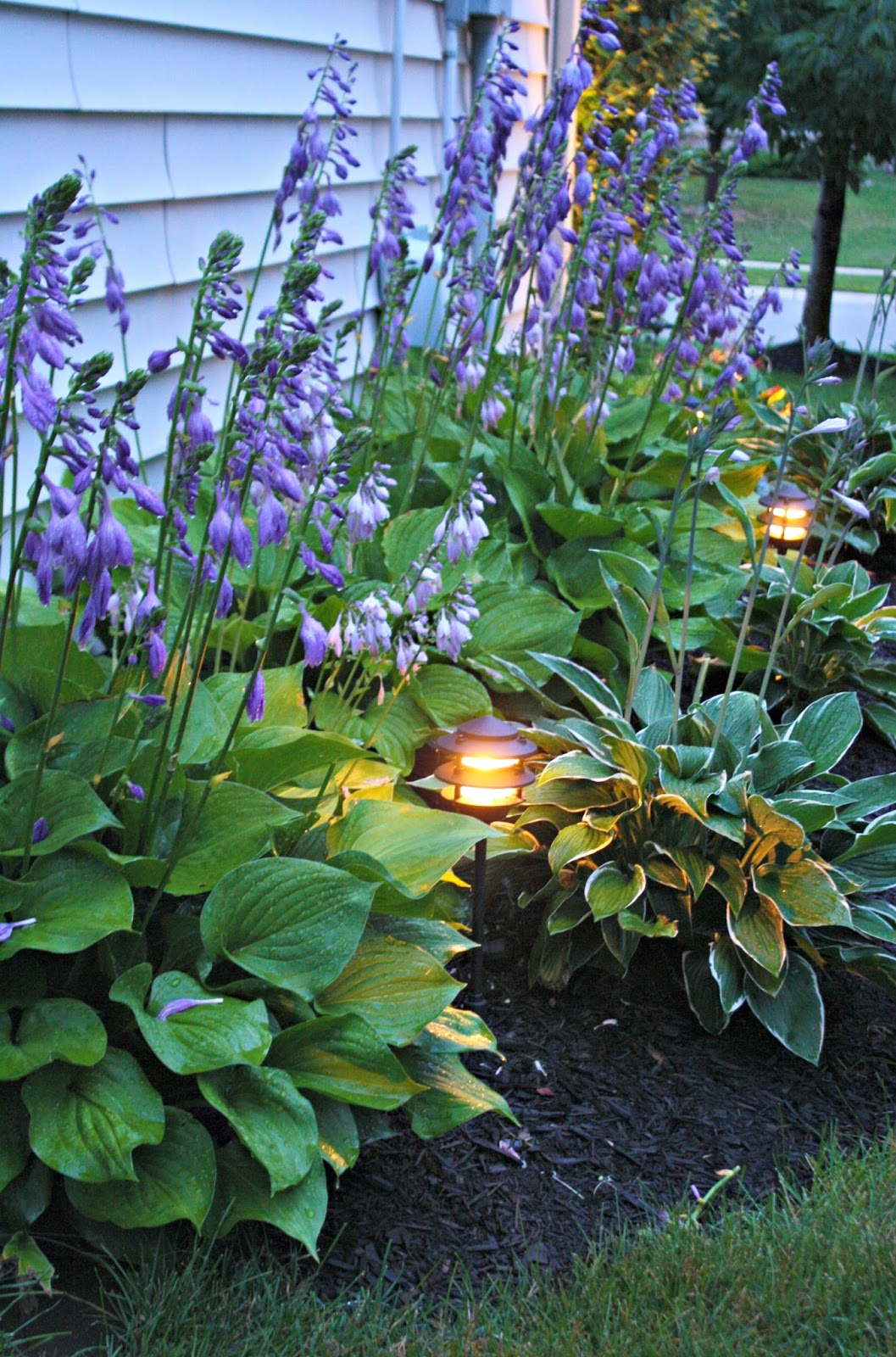 Hosta Garden By House