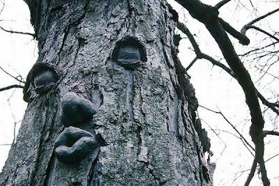 اشجار غريبة ومرعبة في العالم Trees, strange and terrifying in the world  Human_Shape_Strange_and_funny_Tree+%252810%2529