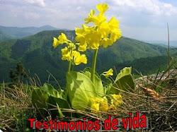 ♣ TESTIMONIOS DE VIDA POR UNA EDUCACIÓN LIBERADORA
