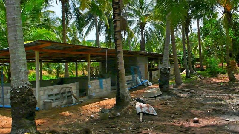 Schweinestall Thailand