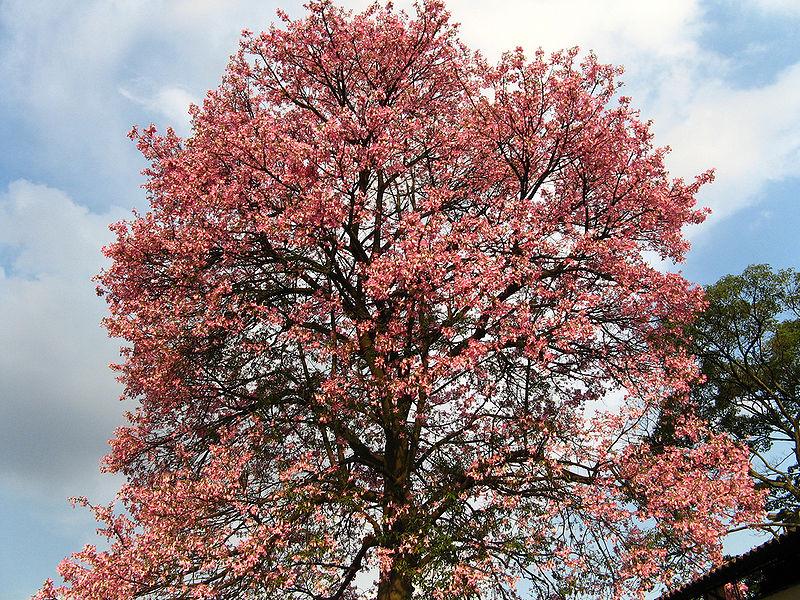 Imágenes de flores rosas y Plantas 365 Imágenes bonitas - Imagenes De Plantas De Rosas