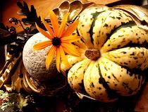 Autumn's Sweet Dumpling Squash