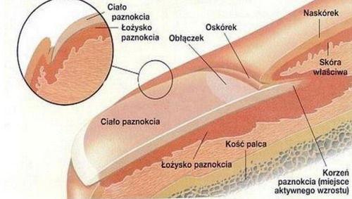 Tak wyglądają moje paznokcie przed...zniszczone brzegi na jednej i