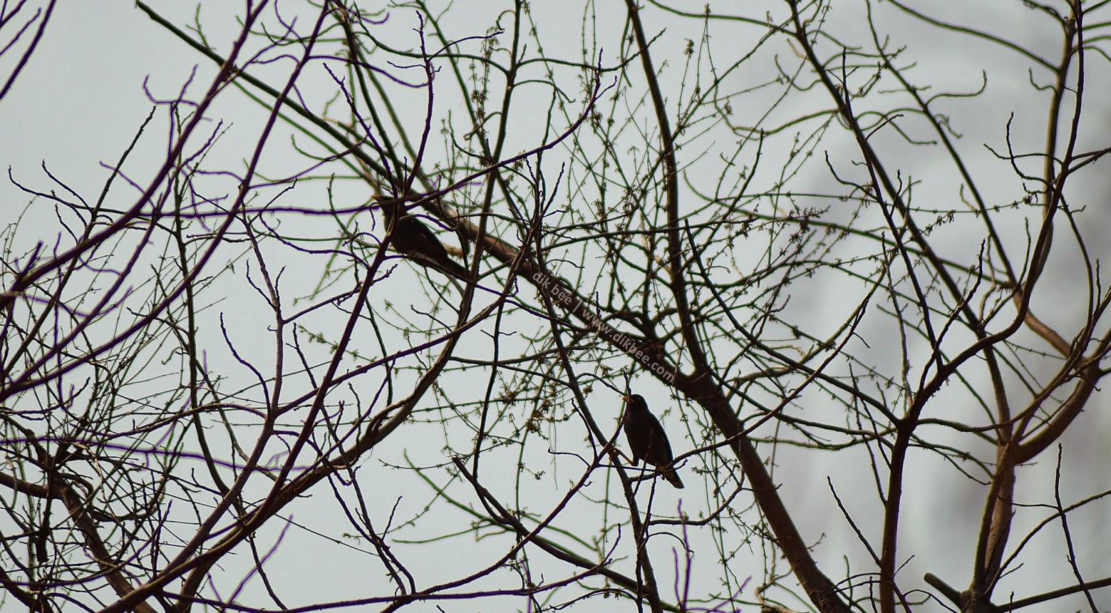 Aktiviti Mengecam Burung Di Kuala Kubu Bharu | Birdwatching Activity